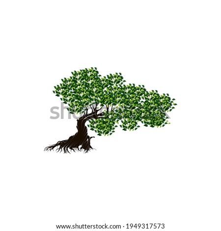 Aruba, Netherlands Antilles. Divi divi tree on the beach Photo stock ©