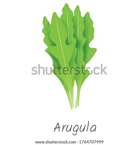 Arugula plant, rocket plant, rocket leaf Foto stock ©