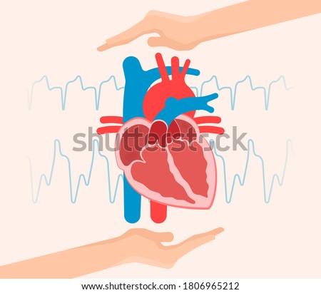 ASD VSD AFib exam hole leak pain TAVI TAVR based birth chest sinus treat angina damage Device murmur primum stroke repair septum ostium occlude surgery replace failure venosis venosus  problem Foto d'archivio ©