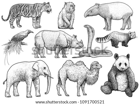 asian animals collection