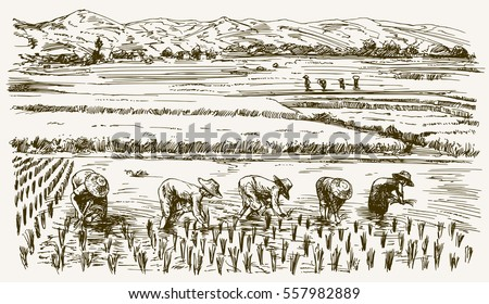 asian farmers working on field