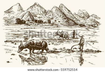 asian farmers working on rice