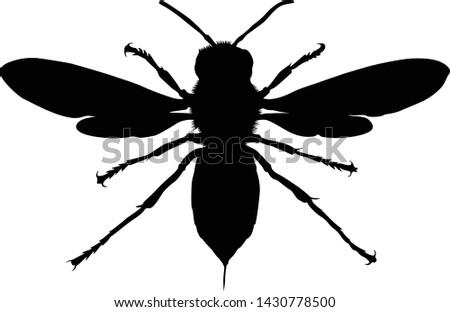 asian giant hornet silhouette