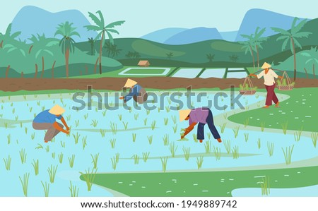 Asian Rice Fields With Workers In Conical Straw Hats. Traditional Agriculture. Vector Illustration.