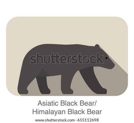 asiatic black bear walking side