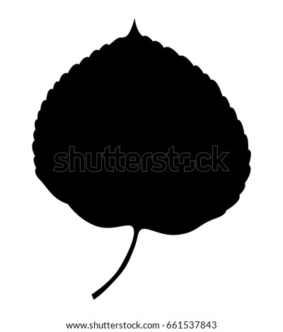 aspen leaf  vector icon
