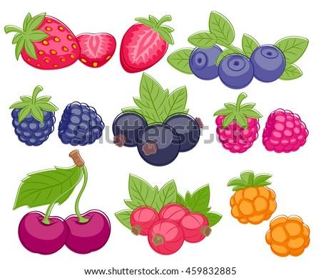 assorted berries set vector
