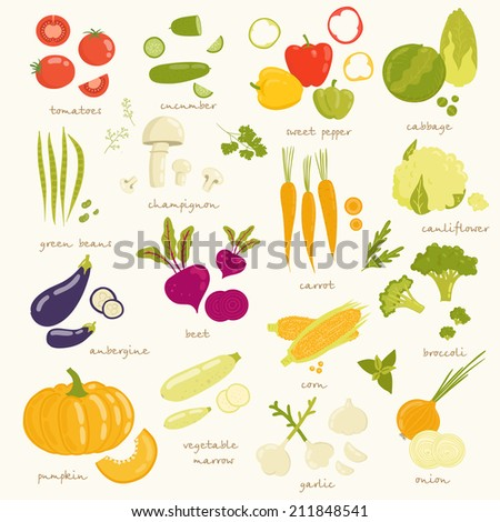 Assorted vegetable vector illustration. tomato, cucumber, pepper, cabbage, broccoli, cabbage, zucchini, eggplant, beans, peas, squash, garlic, onions, corn, beets, greens, carrots, mushrooms isolated