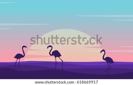 at sunrise flamingo lined on
