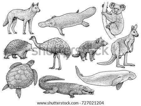 australian animal collection...