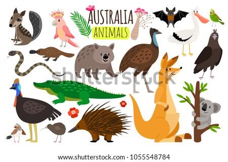Australian animals. Vector animal icons of Australia, kangaroo and koala, wombat and ostrich emu, platypus and echidna in cartoon style isolated on white background