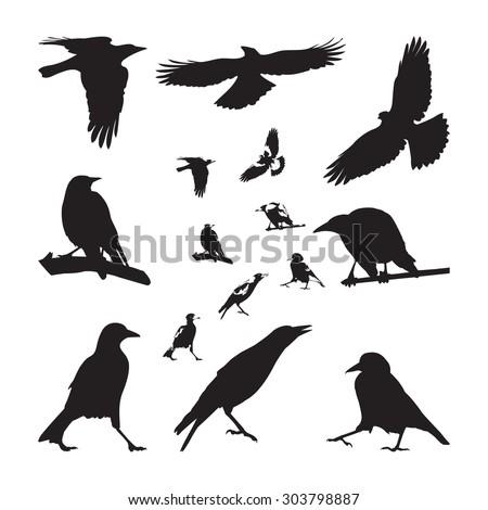 australian magpie silhouettes