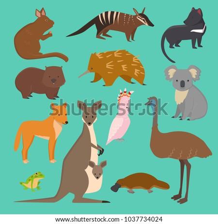 Australian wild vector animals cartoon collection australia popular animals like platypus, koala, kangaroo, ostrich set isolated on background