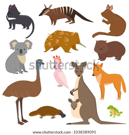 Australian wild vector animals cartoon collection australia popular animals like platypus, koala, kangaroo, ostrich set isolated on white background