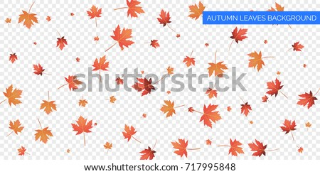 Autumn background. Autumn falling leaves on transparent background.