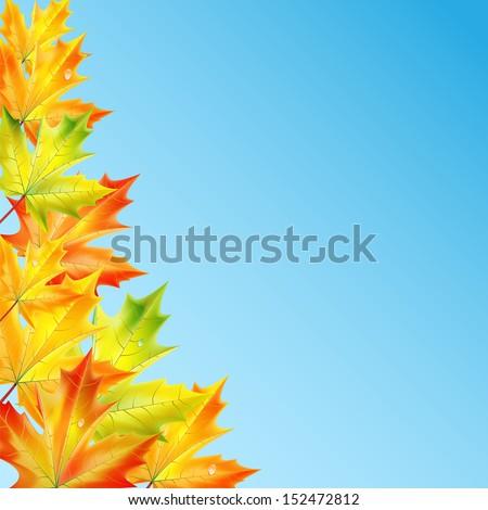 autumn backgroundautumn maple