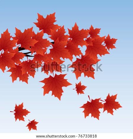 autumn background illustration with maple tree