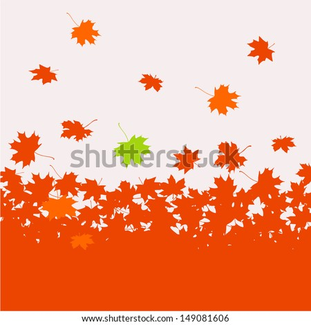 autumn background   maple