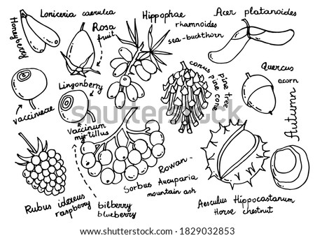 autumn berries  fruits set