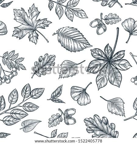 autumn black white outline