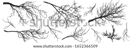 autumn branches of trees