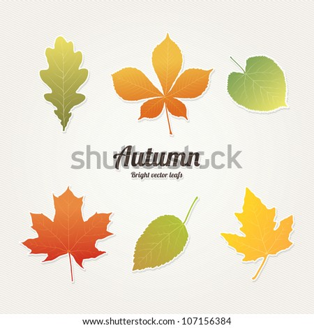 Autumn, bright vector leafs