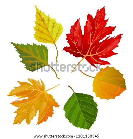 autumn colorful leaves from