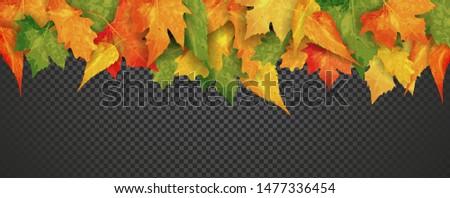 autumn colorful shine falling