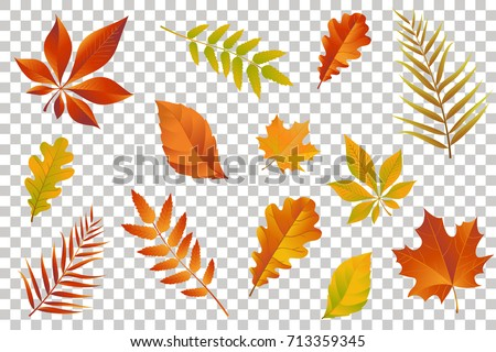 autumn falling leaves isolated