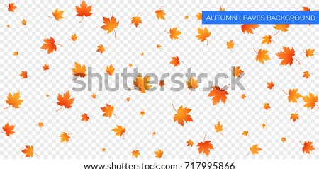Autumn falling leaves on transparent background. Vector autumnal foliage fall of maple leaves. Autumn background design.