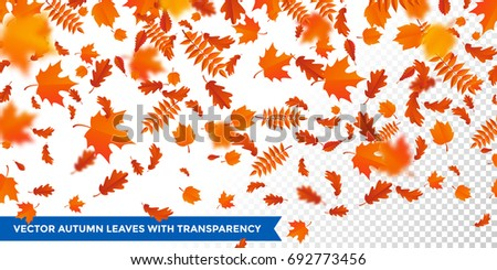 Autumn falling leaves pattern on transparent background. Vector autumnal foliage fall of maple, rowan or chestnut and poplar leaf flying in wind motion blur. Orange design for autumn design
