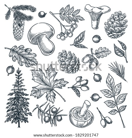 Autumn forest trees, mushrooms, plants and leaves set, isolated on white background. Vector hand drawn sketch illustration. Fall nature design elements Stock photo ©