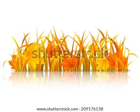 autumn grass and fallen maple