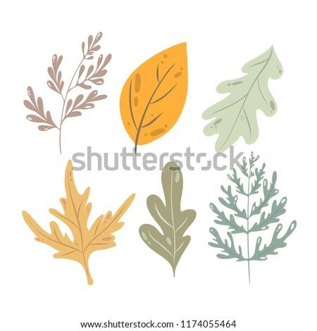 Autumn kit, vector leaves, maple leaf, oak leaf