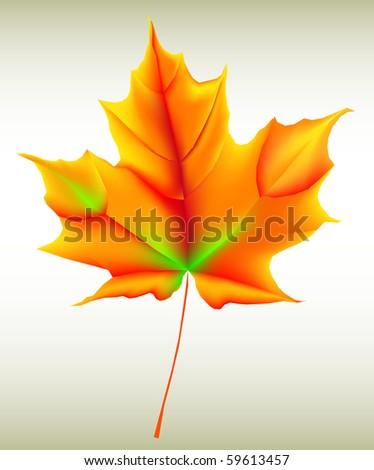 Autumn leaf - Shutterstock ID 59613457
