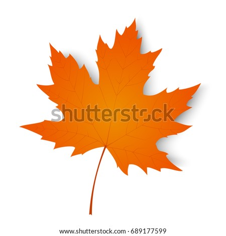 autumn leaf autumn maple leaf
