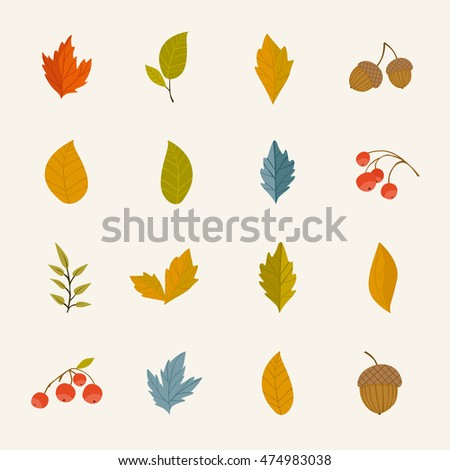 Autumn leaf design. Colorful falling oak, maple, birch leaves, rowan berry, acorn. Vector september, october or november tree foliage. Botanical forest plant element illustration. Autumnal icon set