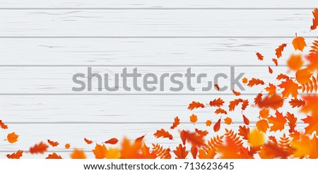 Autumn leaf fall or autumnal falling leaves pattern on white wooden background. Vector orange foliage of maple, rowan or chestnut and poplar leaf flying in wind motion blur design for autumn design