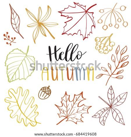 autumn leaf set   vector