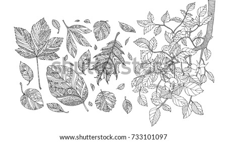 autumn leaves and dog rose