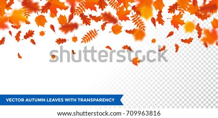 Autumn leaves background on transparent backdrop. Vector red orange autumnal pattern of foliage fall of maple, rowan or chestnut and poplar leaf flying in wind motion blur.