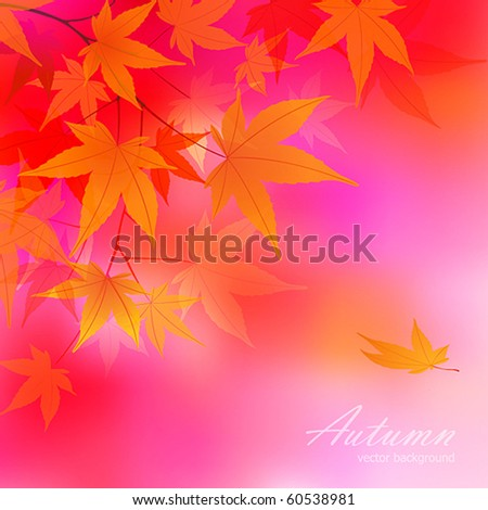Autumn leaves background. vector illustration