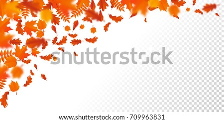 Autumn leaves background with transparency. Vector red orange autumnal pattern of foliage fall of maple, rowan or chestnut and poplar leaf flying in wind motion blur.