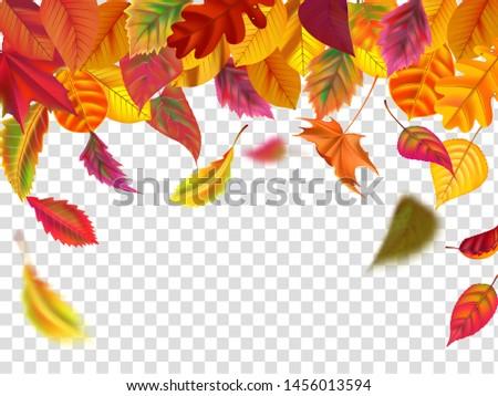 autumn leaves fall falling