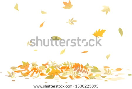 autumn leaves fallen down on