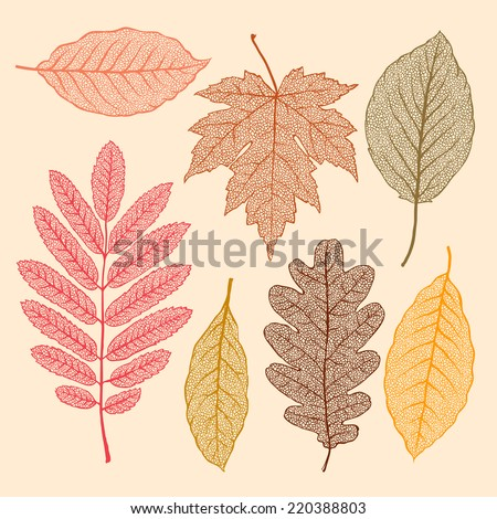 autumn leaves  isolated dried