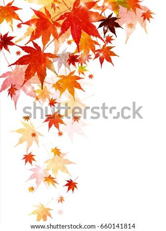 autumn leaves maple leaf