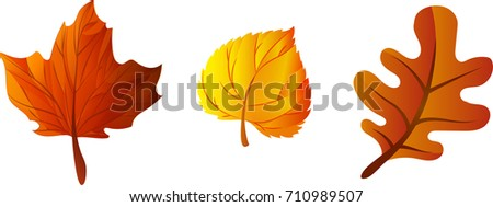 Stock Photo Autumn leaves of trees. Vector illustration.