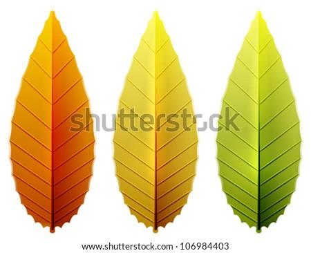 Autumn leaves. Seasonal nature icon