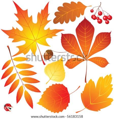 autumn leaves set - stock vector